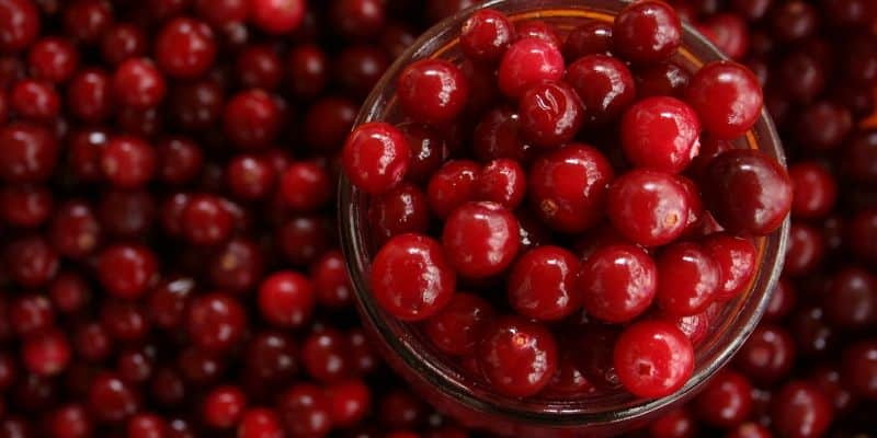 can you juice cranberries
