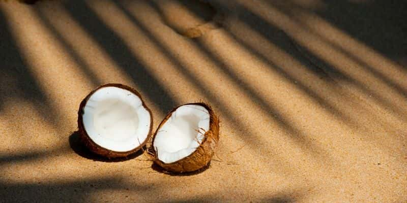 can you juice a coconut